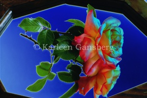 Abstract Rose on Mirror - Photo © Karleen Gansberg