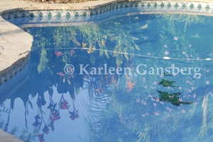 Garden reflecting in pool -© Karleen Gansberg